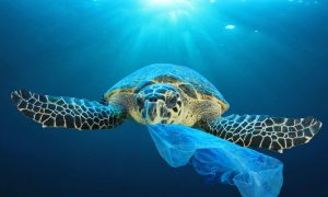 Oxo Plastics are NOT Biodegradable
